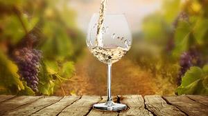 Vin blanc de Provence des Vignerons du Plan de la Tour